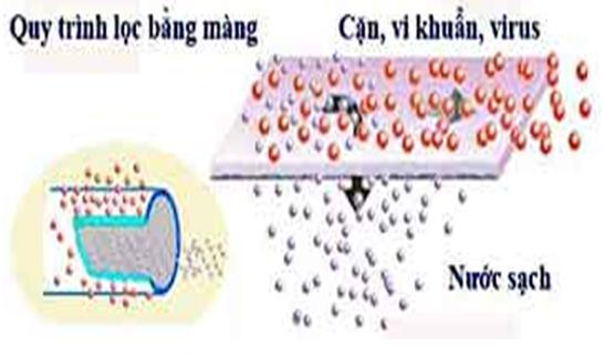 Vi khuẩn, vi rút bị giữ lại nhưng không bị tiêu diệt